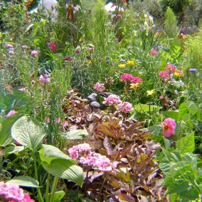 Carbon in the garden: how to prevent climate change in your own back yard